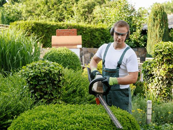 Manutenzione giardino e potatura